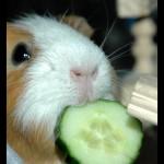 Загадковий ОГІРОК!. вегетаріанство, здоров'я, здорове харчування, їжа, народна медицина, овочі
